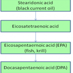 Biochemical pathway of DHA synthesis