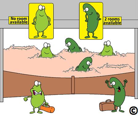 Probiotic gut flora naturally