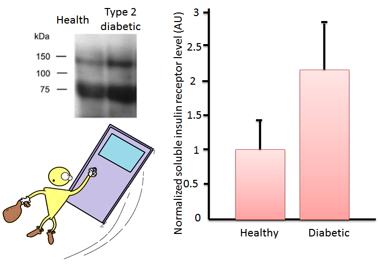 graph showing soluble insulin receptor levels
