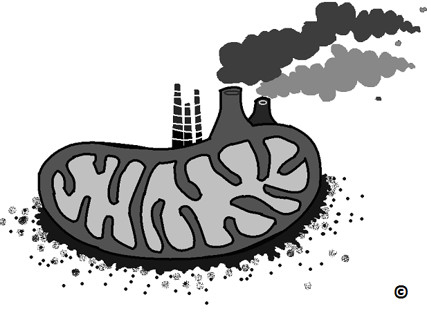 burned out mitochondria