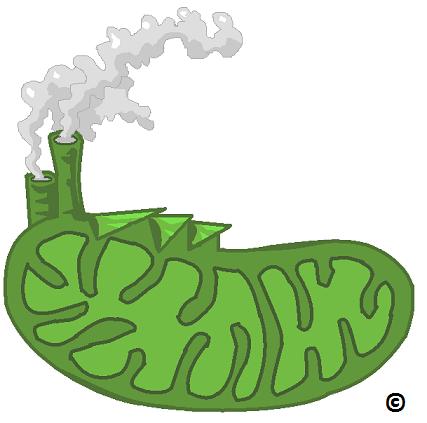 green mitochondria