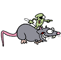 rat under the influence of toxoplasma