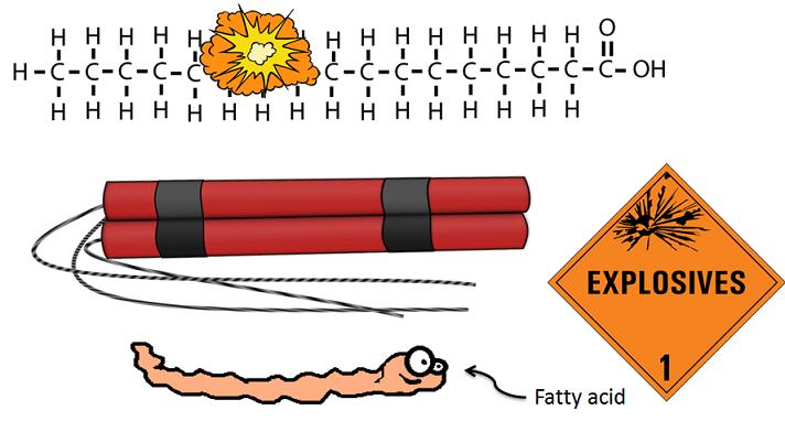 fatty acids as sticks of dynamite