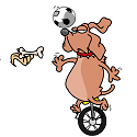 old dog doing a bicycle trick
