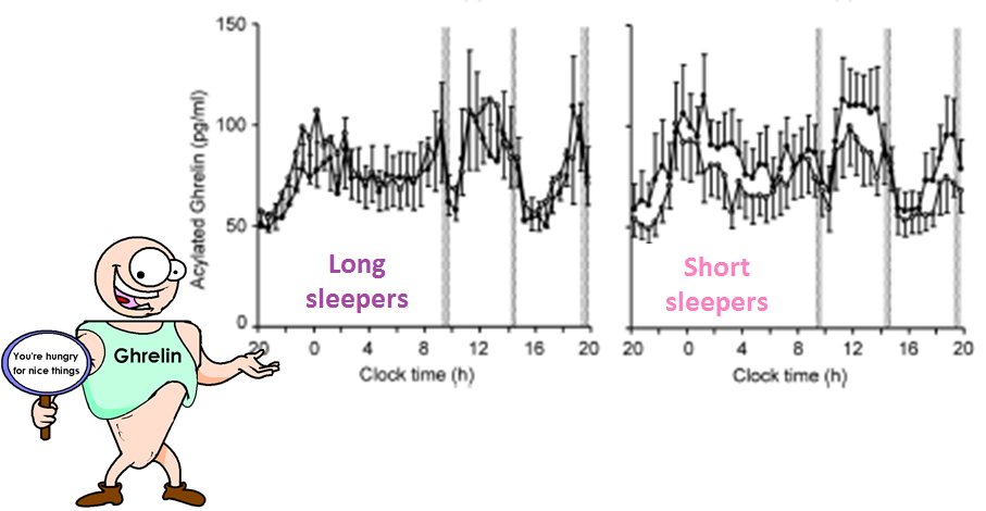 ghrelin profile in short and long sleepers