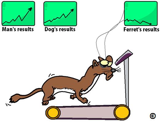 ferret struggling to exercise