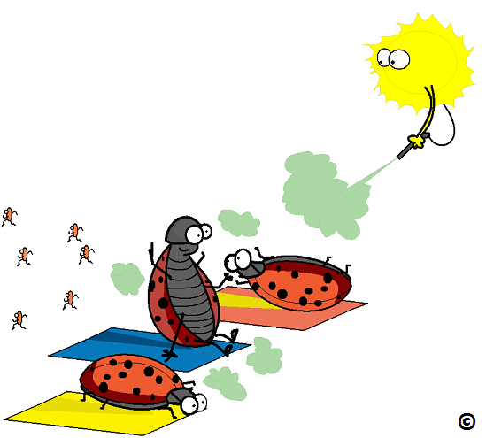 beetles fumigating under the sun