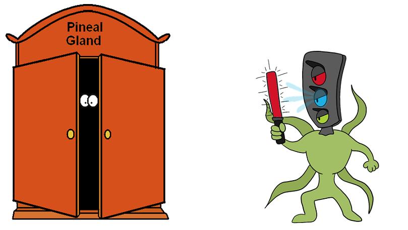 melatonin hiding in the pineal cupboard