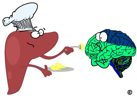 liver force feeding brain fat
