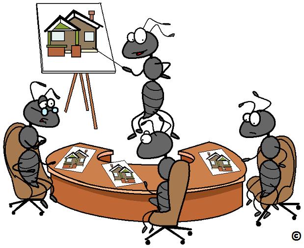 ants make a tough decision