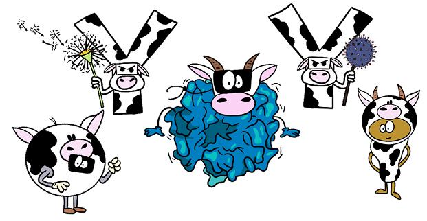 cow milk proteins