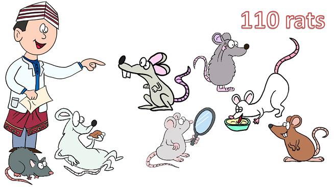 Malaysian scientist herding rats