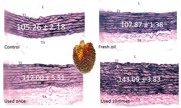 Vascular remodelling following oil consuption