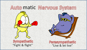 automatic nervous system (Want to overcome insulin resistance ?  Roll out the welcome mat)