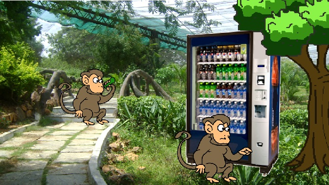 monkeys drinking soda