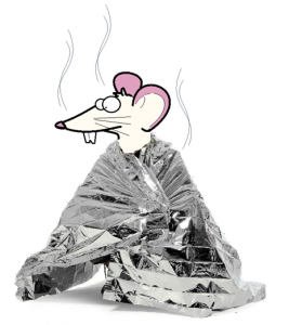 rat wrapped in a heating blanket