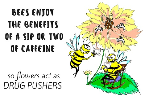 bees drinking coffee