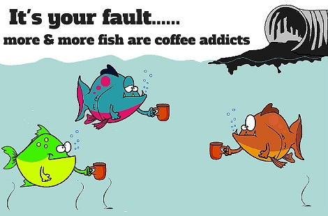 fishes addicted to caffeine