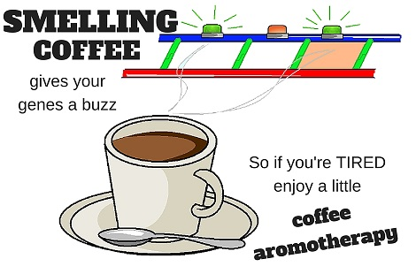 coffee aroma changes gene expression