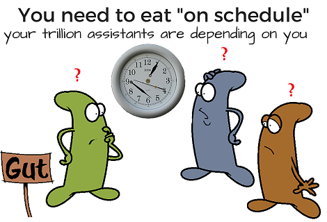 bacteria struggling to tell time in the gut