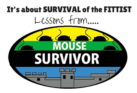 mouse survivor
