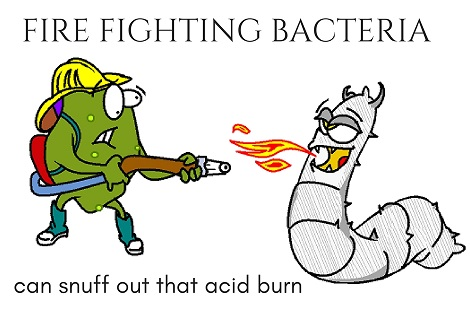 probiotic snuffing out acid fire