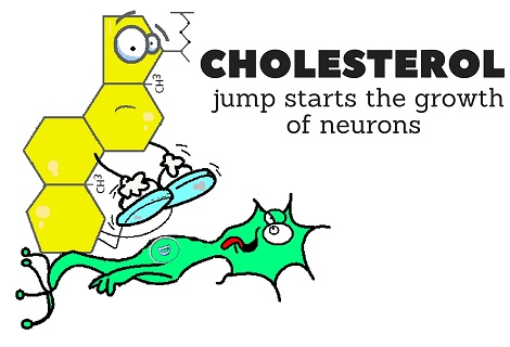 cholesterol jump starting a dopamine neurone
