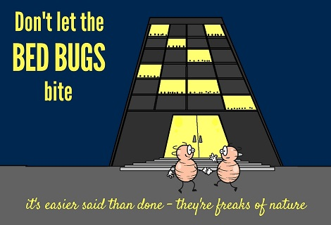 bed bugs moving into a building