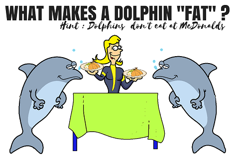 fat dolphins