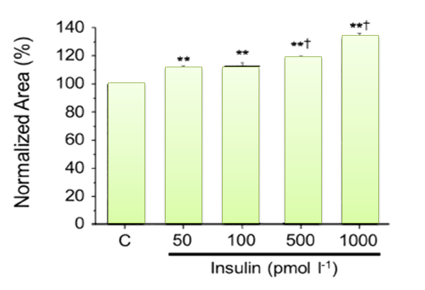 insulin causing insulin receptor shedding