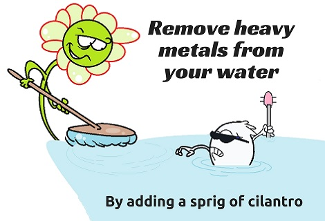 plant removing heavy metals from water