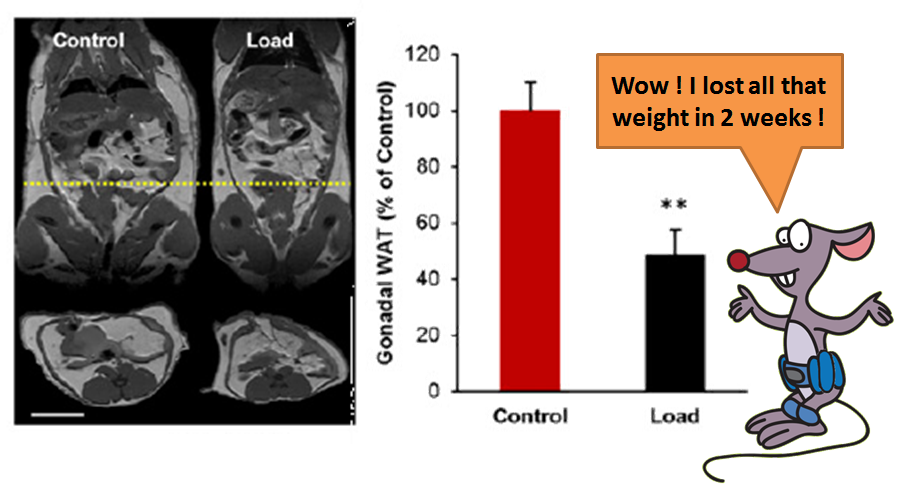 weight loss in mice with capsule