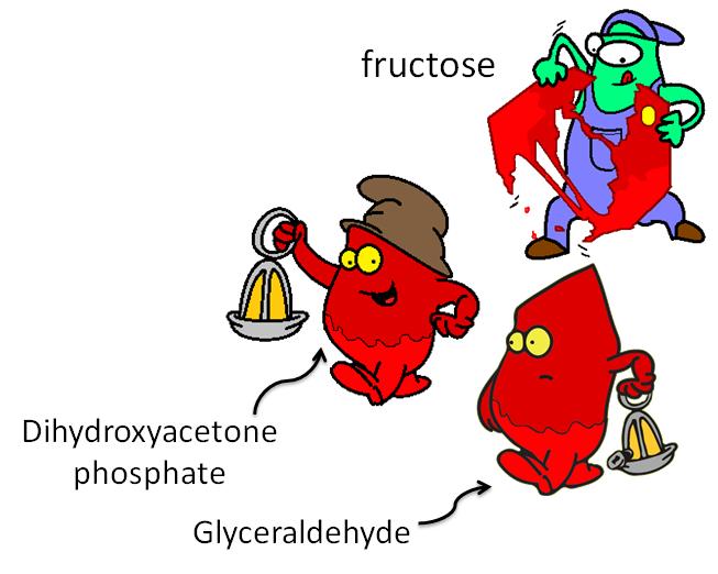 fructose split