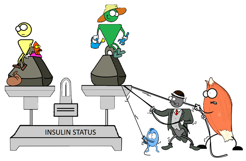 restoring the insulin balance