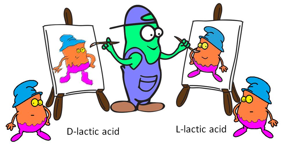 enzyme not ambidextrous