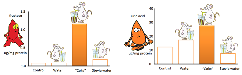 fructose and uric acid levels following rehydration with coke