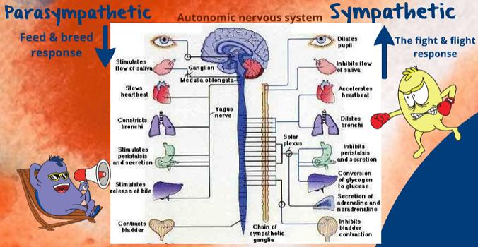 scheme showing autonomi