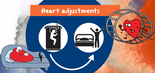 heart adjustments when you change posture