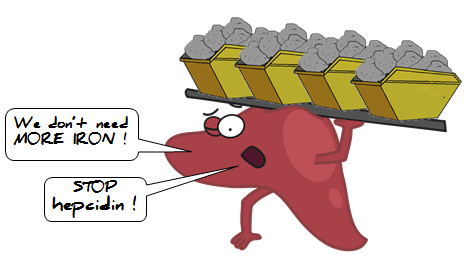 liver blaming hepcidin for being overburdened with iron