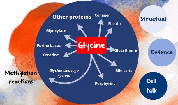 glycine biology