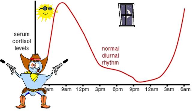 cortisol circadian rhythm
