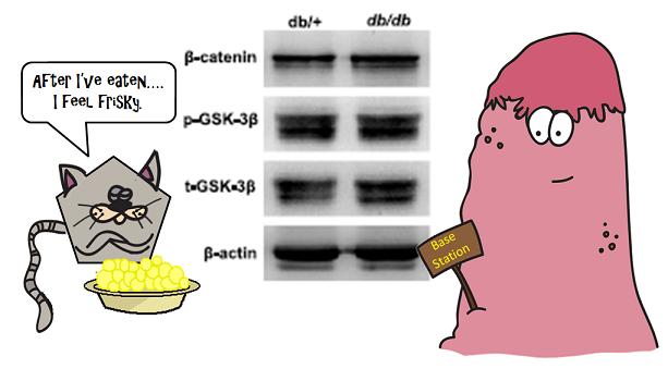 beta catenin signalling