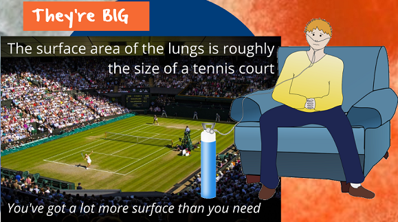 lungs the size of a tennis court