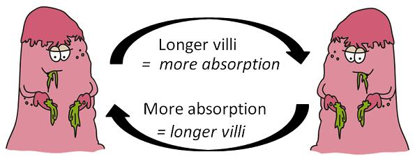 The villi vicious cycle