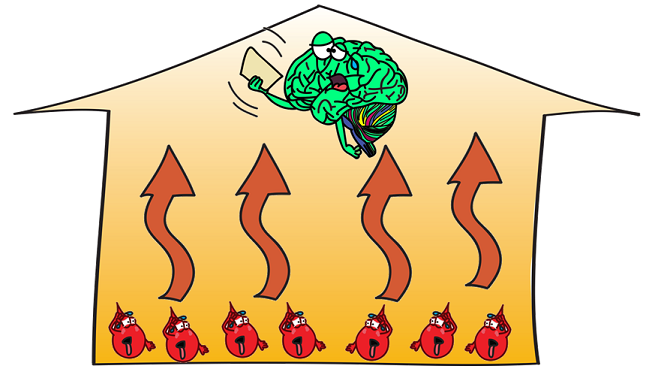 red blood cells making brain hot