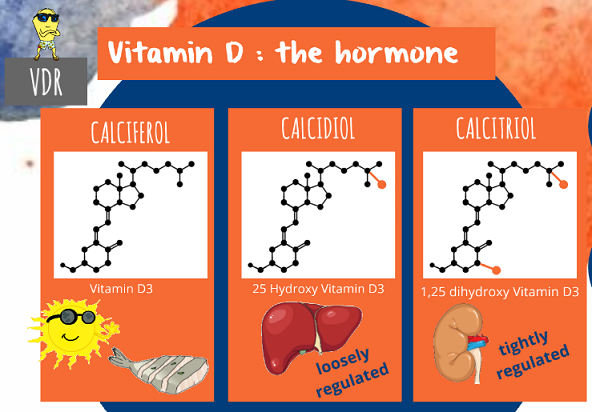 the three different forms of vitamin D