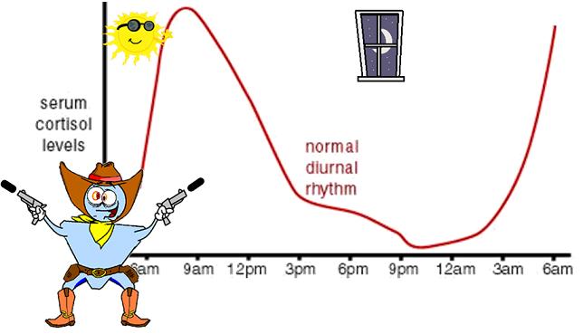 cortisol rhythm