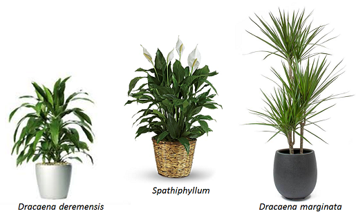 selection of indoor plants that clean air