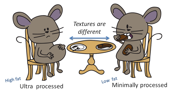 mice discovering the food texture is different