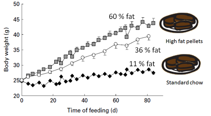 Graph showing body weights of mice on pellet diet